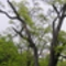 Fa ellenfényben