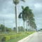 egy út dél-Floridán