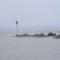A Balaton morcos arca 2