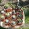 kaktuszaim