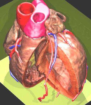 Emberi szív 2