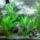 Gringó akváriuma