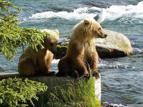 Katmai_Nemzeti_Park,_Alaszka