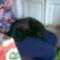 Riki alszik 4