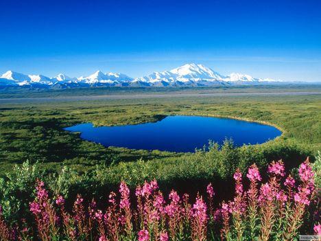 Tó_a_tundrán,_Mount_McKinley,_Denali_National_Park,_Alaszka