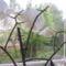 Ablakom  virágai 1
