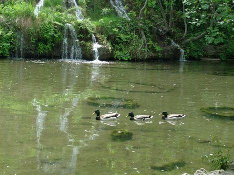Margitsziget - A tó egyik része (4)