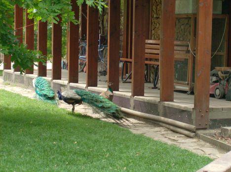 Margitsziget - Az állatkert lakói (10)