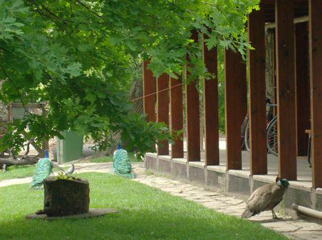 Margitsziget - Az állatkert lakói (11)