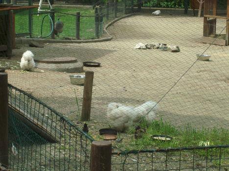 Margitsziget - Az állatkert lakói (12)