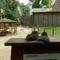 Margitsziget - Az állatkert lakói (15)