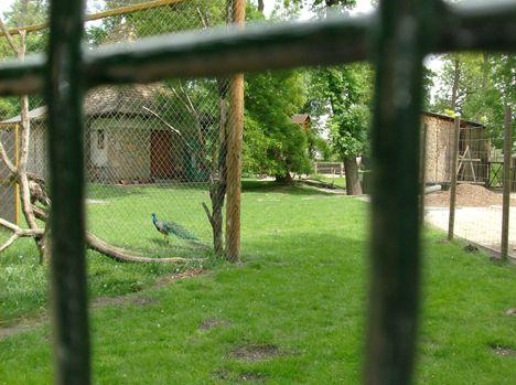 Margitsziget - Az állatkert lakói (19)