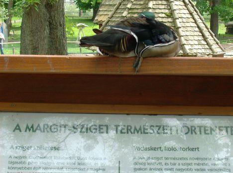 Margitsziget - Az állatkert lakói (3)