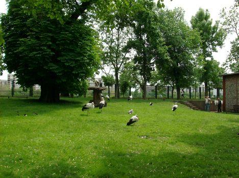 Margitsziget - Az állatkert lakói (5)