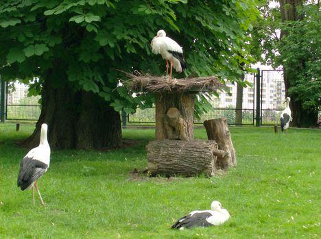 Margitsziget - Az állatkert lakói (7)