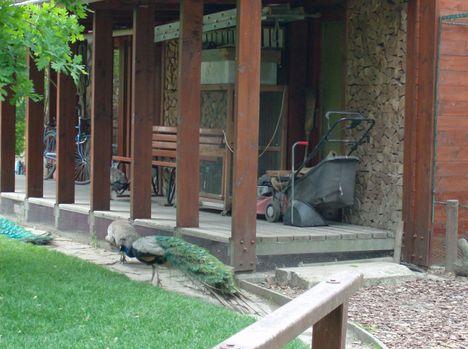Margitsziget - Az állatkert lakói (9)