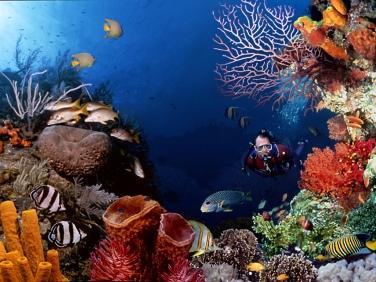 korall 5
