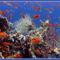 korall 6