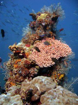 korall 7