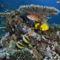 korall 8