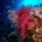 korall 9
