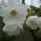 Május virágai 10