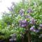 Május virágai 2