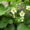Május virágai 5