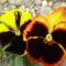 Május virágai 6