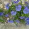 Május virágai 7