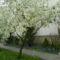 Május virágai 8