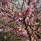 Május virágai 9