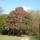 Ha_van_rhododendron_fa_akkor_ez_az_-001_702816_79560_t