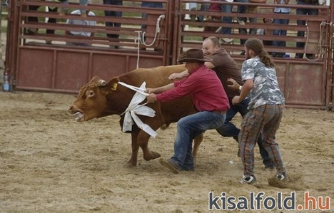 rodeo show 5