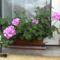 utcák, kertek...virágok 1