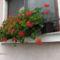 utcák, kertek...virágok 2
