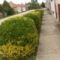 utcák, kertek...virágok 3