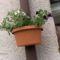 utcák, kertek...virágok 8
