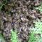 májusi méhraj a kertben 1