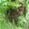 Méhraj a kertben 02