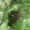 Méhraj a kertben 03