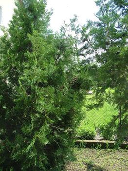 Méhraj a kertben 05