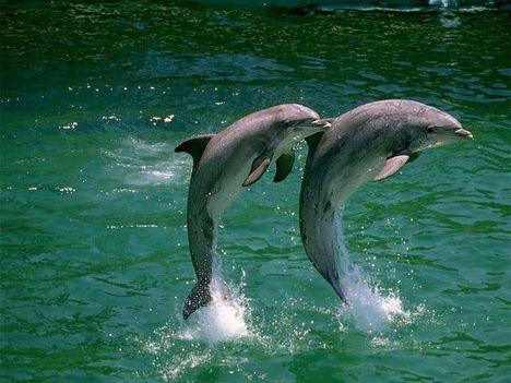 delfinek 3