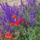 Mezei virágok.10.05.