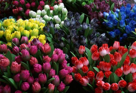 szép virágok 1