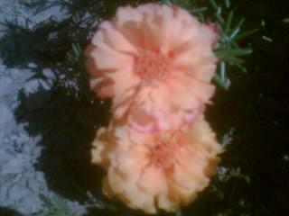 szép virágok 3