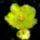 Kaktusz_736339_78938_t