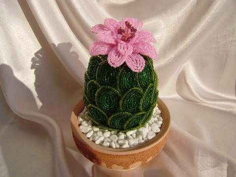 Ananász kaktusz