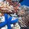 korallzátony 15