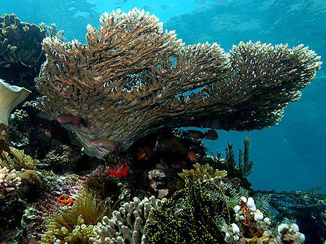korallzátony 2
